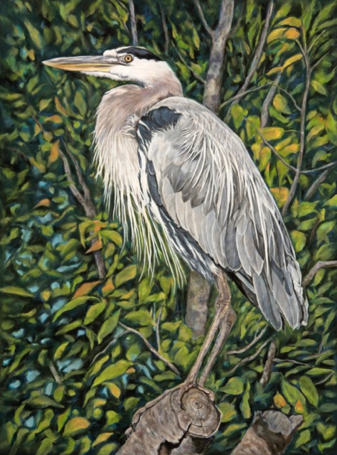 Heathcote Great Blue Heron